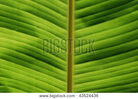Tropical Leaf Close-up