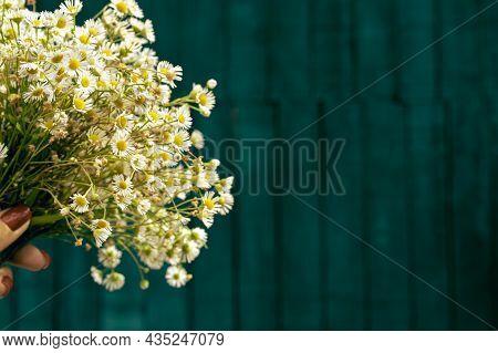 Aster Ericoides, Symphyotrichum Ericoides, White Heath Aster, White Aster, Heath Aster, Snow Flurry