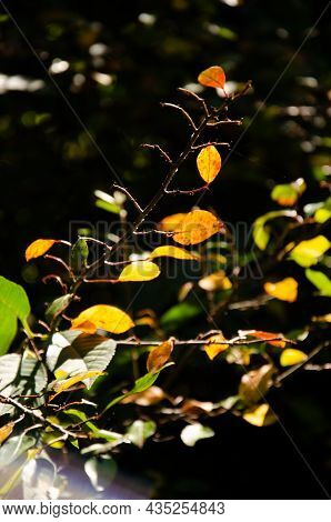 Orange, Green And Yellow Leaves On Blurred Natural Background With Bokeh. Autumn Concept. Autumn Fol