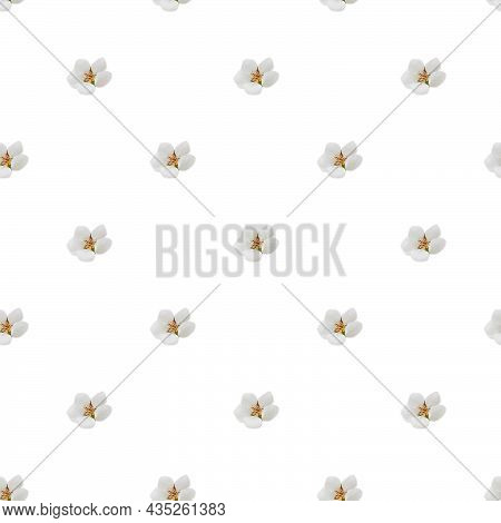Cherry Blossoms  Isolated On White Background. Seamless Pattern.