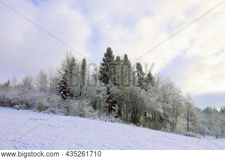 Winter forest in Carpathians in mest and evening light. take in Ukraine
