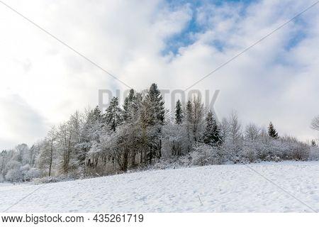 winter landscape with frozen grove in mountains mist. Take it in Ukrainian Carpathian mountains