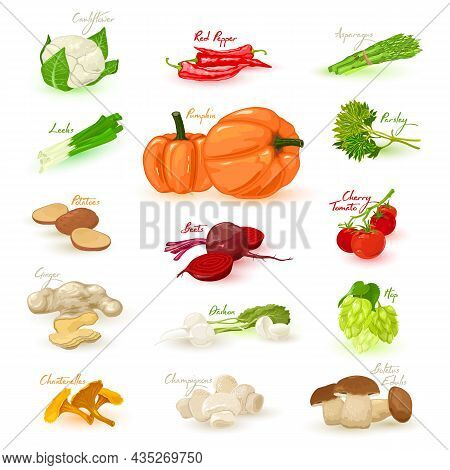 Collection Of Organic Fresh Clean Eating, Natural Farm Product, Vegetarianism. Vector Healthy And Vi