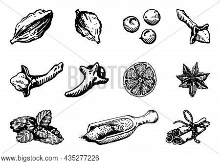 A Set Of Spices For Mulled Wine, Vector Illustration Sketch.