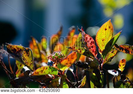 Orange, Green And Burgundy Leaves On Blurred Background With Bokeh. Autumn Concept. Autumn Foliage.