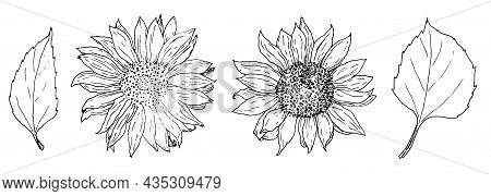 Sunflower Flower And Leaf Set. Hand-drawn In Sketch Style Sunflower Flowers With Leaves, Isolated Bl