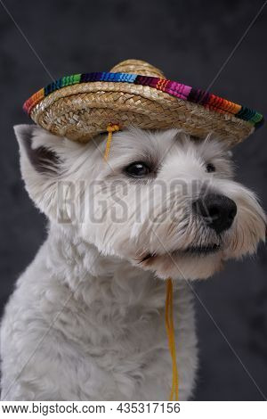 Lovable White Terrier Doggy With Mexican Straw Hat