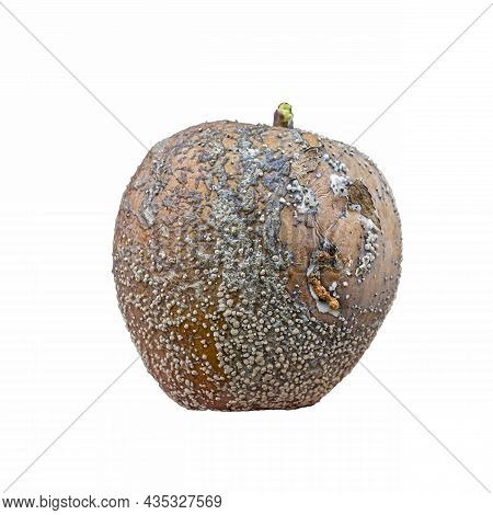 Rotten Apple As A Symbol Of Loss Of Health, Lack Of Integrity, Lose Virginity