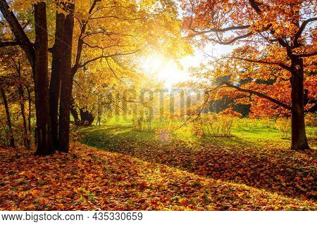 Autumn Foliage In Catherine Park At Sunset, Tsarskoe Selo (pushkin), Saint Petersburg, Russia