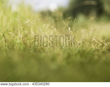 Autumn Natural Background With Green And Yellow Dried Grass On Field. Fall Season. Selective Focus.