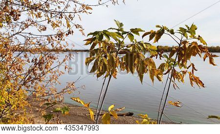 Nature Landscape With Trees. Autumn Yellow Leaves