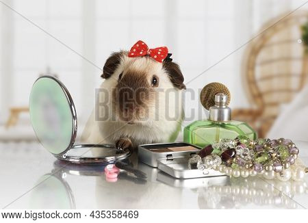 Likable Guinea Pig With A Cap On Her Head Looks In A Cosmetic Mirror At The Makeup Table Indoors