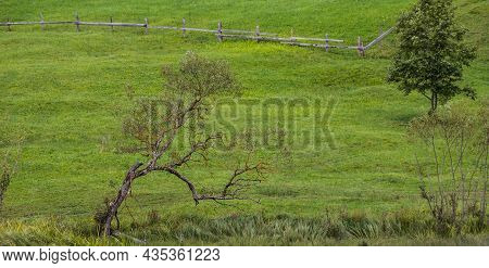 Landscape Of Summer Nature With Green Glade, Forest And Big Single Tree