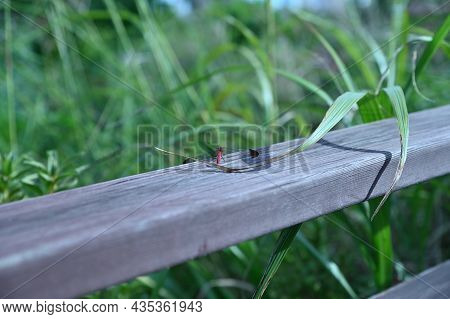 The Red Dragonfly Sitting On The Railing