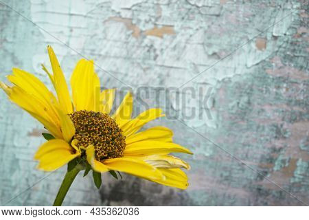 Yellow Flowers On Vintage Turquoise Wooden Background, Border Design. Vintage Color Tone - Concept F