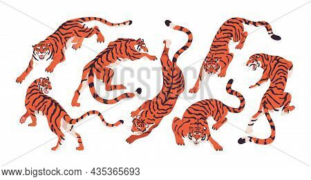 Bengal Tigers Set. Wild Striped Asian And African Animals In Motion, Crouching And Crawling On Paws.