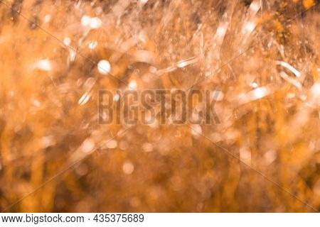 Fall Blurred Background. Out Of Focus Video Footage. Autumn Nature Leaves Blur Background. Sun Shine