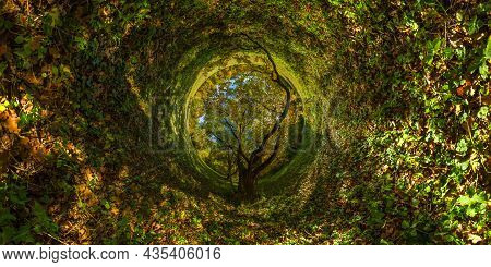 360 Degree Hyperbolic Tunnel Panorama Projection Of Spherical Panorama Under Yellow Oak At Sunny Aut