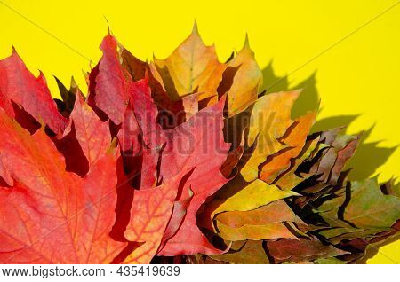 Bright Autumn Leaves Lie On Yellow Background With Copy Space. Texture Of Multicolored Maple Leaves