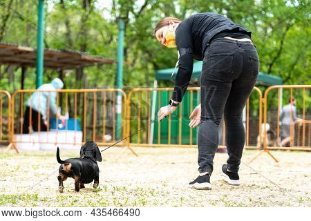 Handler Trains Obedient Pet To Perform At Dog Show.