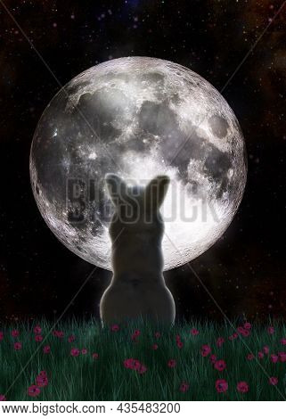 3D White Bunny And Full Moon
