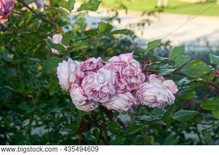 Dolna Krupa, Trnava, Slovakia 09-23-2021: Rosary Of Contess Maria Henrietta Chotek. The Garden Was R