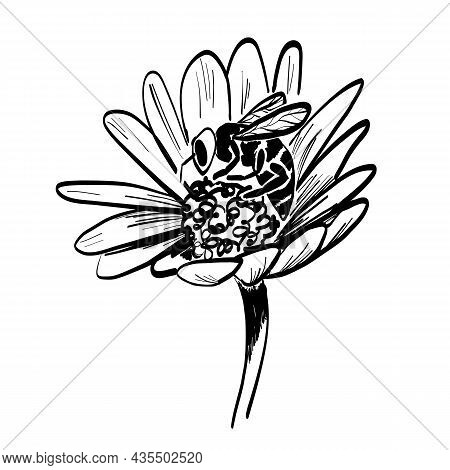 The Bee Sips At Flower, Collects Nectar. Healthy Ecosystem Symbol. Sketch Vector Isolated Illustrati