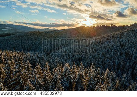 Aerial Winter Landscape With Spruse Trees Of Snow Covered Forest In Cold Mountains In The Evening.