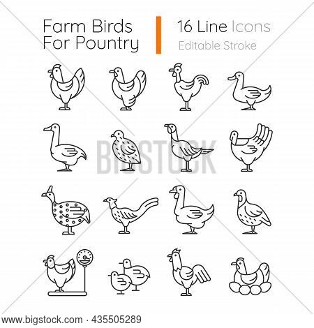 Farm Birds For Poultry Linear Icons Set. Domestic Birds. Ducks, Geese Husbandry. Commercial Fowl Far