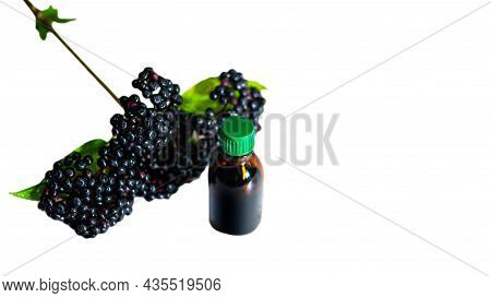 Bush With Medicinal Black Berry Isolated On White Background. Elderberry With A Jar For Medicine. Ho