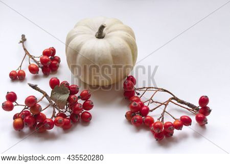 One White Pumpkin And A Twig Of Hawthorn On A White Background.fall, Halloween, Thanksgiving Concept