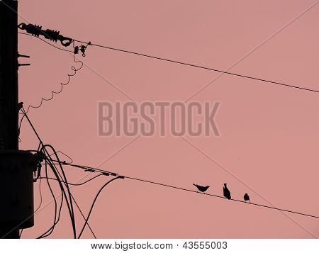 birdies on line