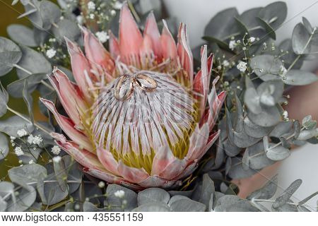 Protea Flower In The Wedding Bouquet, Beautiful Wedding Bouquet Of Protea Flowers In Hands Of The Br
