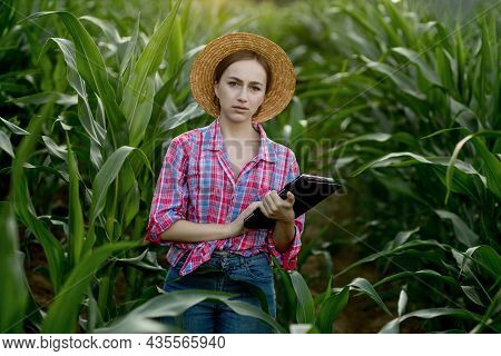 Farmer Or An Agronomist Inspect A Field Of Corn Cobs. The Concept Of Agricultural Business. Agronomi