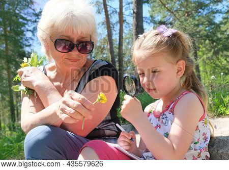 Grandmother And Her Granddaughter Picking Various Plants And Flowers In The Forest And Investigating