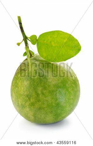 Pomelo, Pummelo, Pommelo (citrus Maxima o Citrus Grandis), aislado