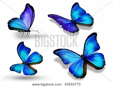 Four blue butterfly isolated on white background