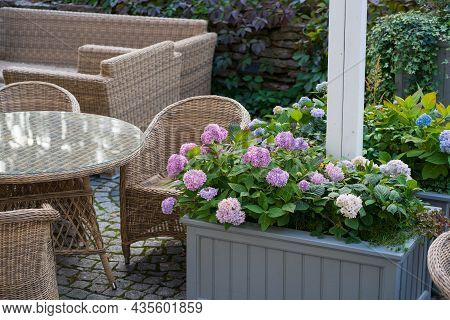 Spend Time On Terrace: Cozy Street Cafe Interior With Wooden Wicker Chairs And Blooming Hydrangea. G