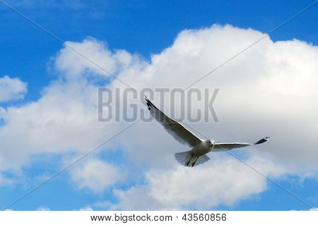 Seagull Flying Against a Beautiful Blue Sky