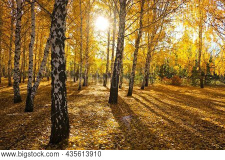 Autumn Landscape With Bright Yellow Leaves Paint. A Ray Of Sunshine Among The Foliage And Branches.