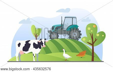Agriculture Or Farming Concept. Tractor Driving Down Hill. Cow, Chicken And Goose Grazing In Field.
