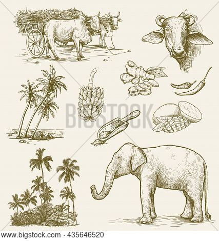 India Sketch Set. Indian Elephant, Indian Bulls, National Cuisine And Palms.