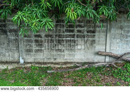 Texture Of Abstract Old White Brick Cement Wall In Industrial Building And Green Grass Plants With G