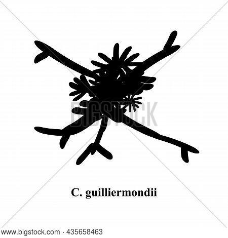 C. Guilliermondii Candida. Pathogenic Yeast-like Fungi Of The Candida Type Morphological Structure.