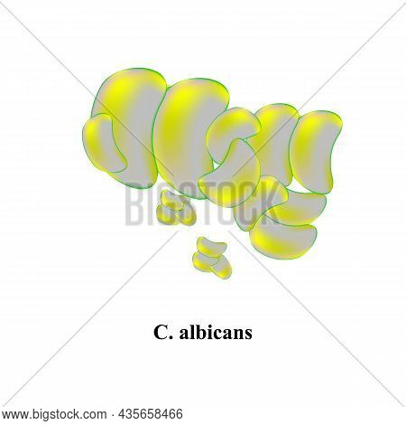 C. Albicans Candida. Pathogenic Yeast-like Fungi Of The Candida Type Morphological Structure. Vector
