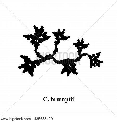 C. Brumptii Candida. Pathogenic Yeast-like Fungi Of The Candida Type Morphological Structure. Vector