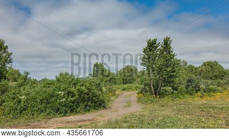 A Dirt Road Winds Through The Forest. There Is Grass And Wildflowers In The Clearing. There Are Gree