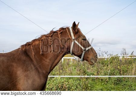 Close-up Of The Head Of A Brown Horse Standing In A Paddock In A Meadow With Green Grass. The Horse'