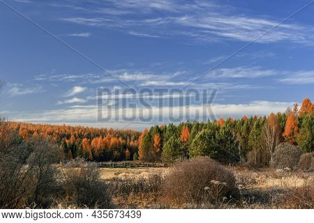 View Of The Siberian Autumn Taiga On A Frosty September Morning. Forest Landscape After Frost In The