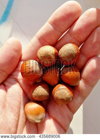 Close-up Of A Man's Palm Holding A Handful Of Hazelnuts In A Shell. Vertical Photo